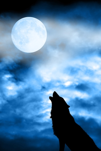 A wolf in silhouette howling at the moon