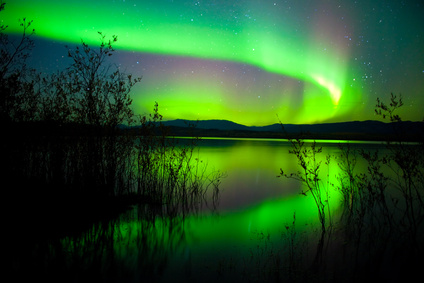 Intense northern lights (Aurora borealis) over Lake Laberge, Yukon Territory, Canada, with silhouettes of willows on lake shore.