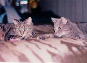 Arafel and McDoogal