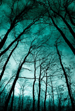 Looking up from the ground at spooky trees in a twilight forest
