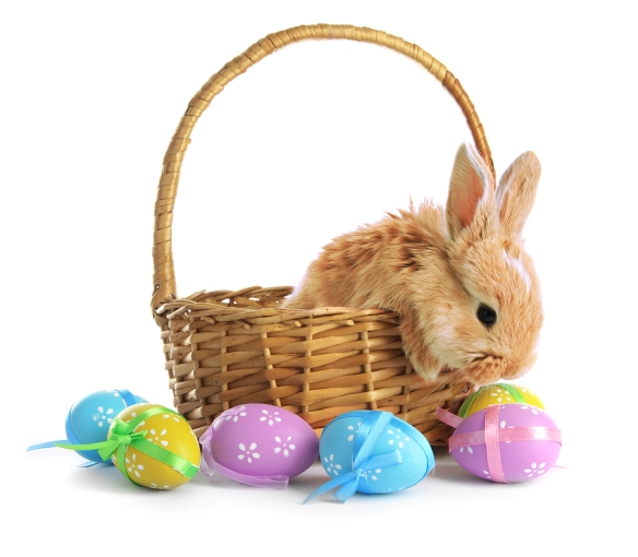 bigstock-Fluffy-foxy-rabbit-in-basket-w-42872128