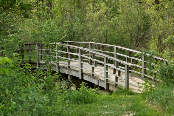 Old Wooden Bridge through Heavy Forested Path