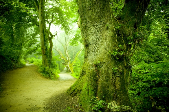 bigstock-Forest-Pathway-8576629