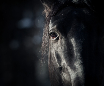 bigstock-Horse-Eye-In-Dark-39925873