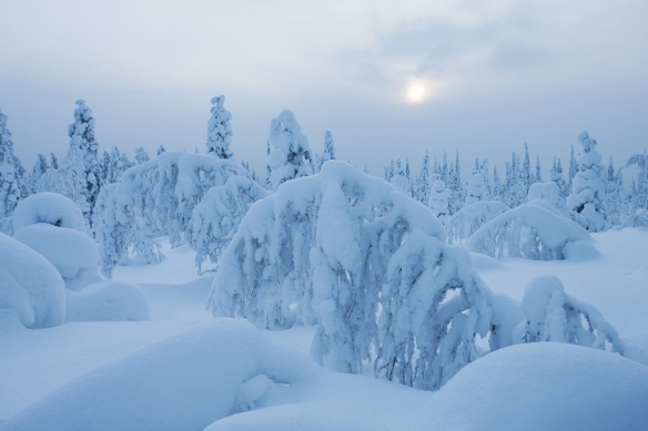 bigstock-Nordic-Winter-Forest-With-Lots-53205442