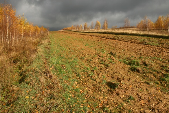 Farm field in autumn beneath a stormy sky