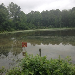 One of the ponds in the TNT Area of West Virginia