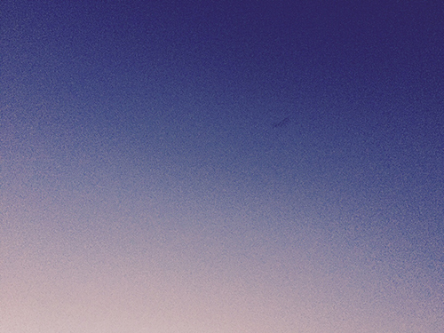 Night sky with a bat in flight