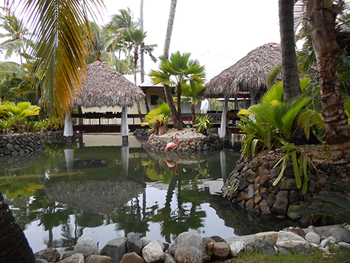 Lush tropical setting with palms, pond and flamingo
