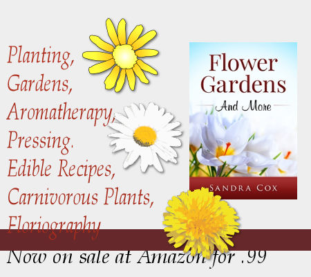 Graphic advertising sale of book Flower Gardens and More has sun and daisies
