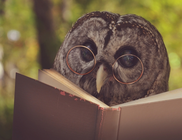 An owl with glasses is reading a book in the woods