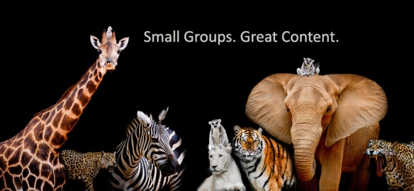 "A group of animals are together on a black background. Animals range from an Elephant, Zebra, White Lion, Monkey, Giraffe, Lemur, and Tiger. Text above image says ""small groups. Great content."""
