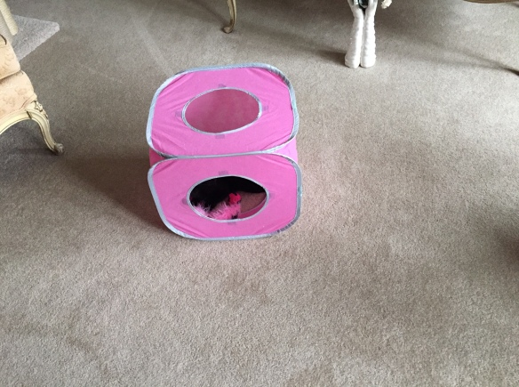A flexible pink cube cat toy with a black cat inside