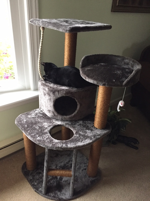 cute black cat on a indoor climbing pet tree with a small ladder at the bottom and tiers for laying at the top