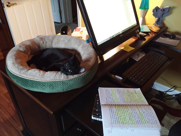Cute black cat lying in a circular bed on top of desk beside a computer screen