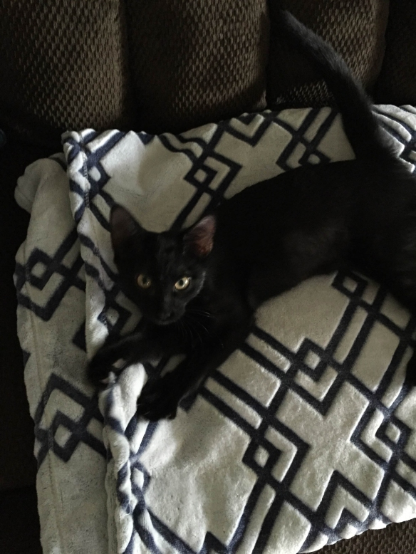 cute black cat lying on a white and blue blanket, looking at camera