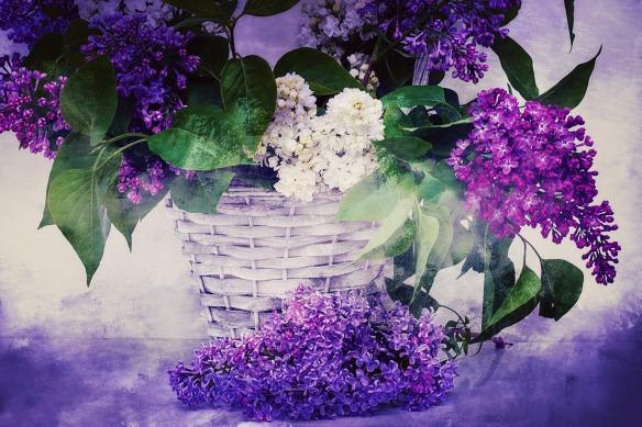 basket of spring lilacs