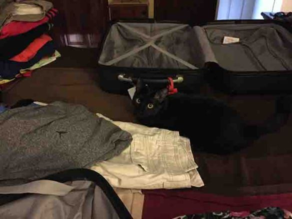 Black cat, Raven, with suitcase