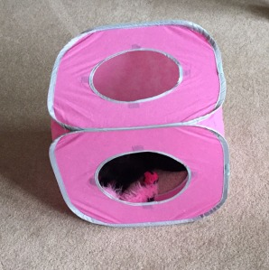 black cat in pink cube with cat toy