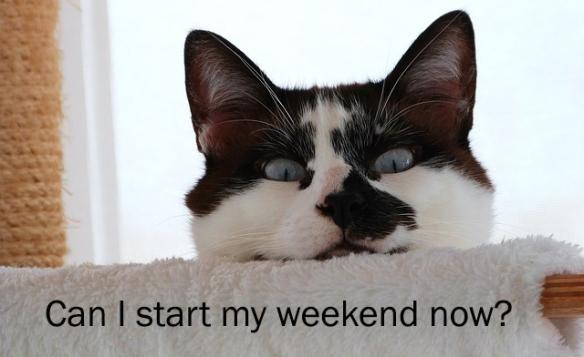 funny cat peeking over shelf at camera