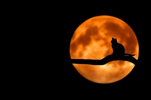 silhouette of black cat sitting on tree branch at night in front of a large orange moon