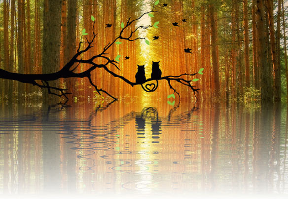 two cats in silhouette with tails twined into a heart, sitting on branch above lake in autumn setting