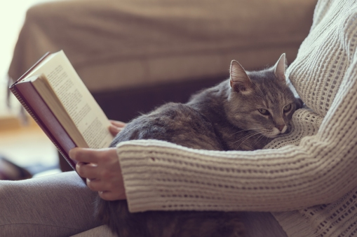 Soft cuddly tabby cat lying in its owner's lap enjoying and purring while the owner is reading a book
