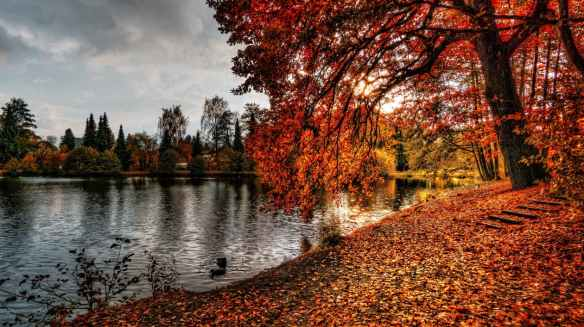 autumn bank and tree in fiery colors over dark lake