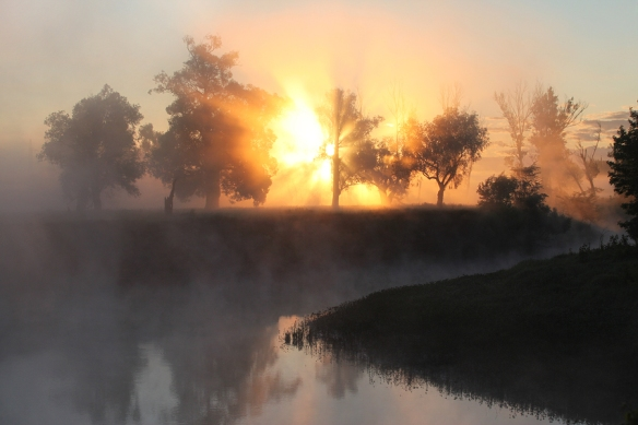 picturesque summer landscape misty dawn in an oak grove on the banks of the river