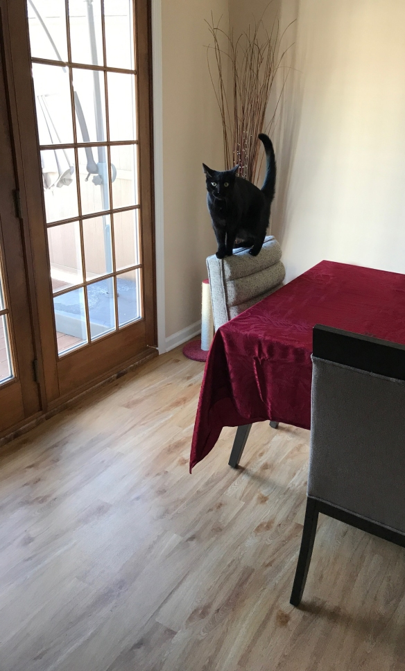Black cat balancing on the back of chair