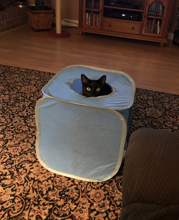 Black cat peeking out of a large toy cube