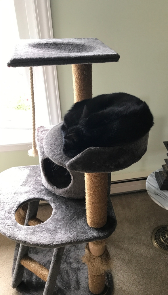 Black cat curled up on a large cat tree