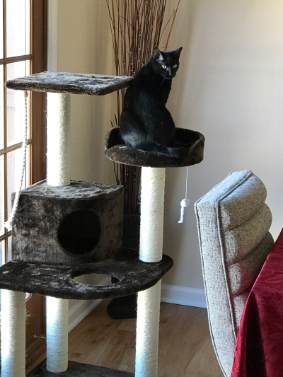 Black cat sitting on a large cat tree in front of a French door
