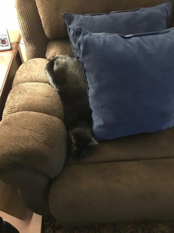 black at squished between pillows on couch