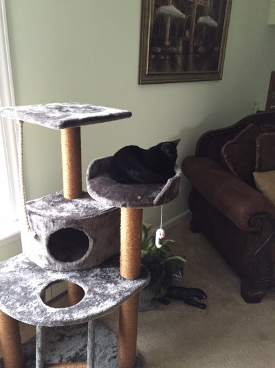 Three-tiered cat tree with sisal/scratching posts. Small black cat sitting on tree middle tree platform