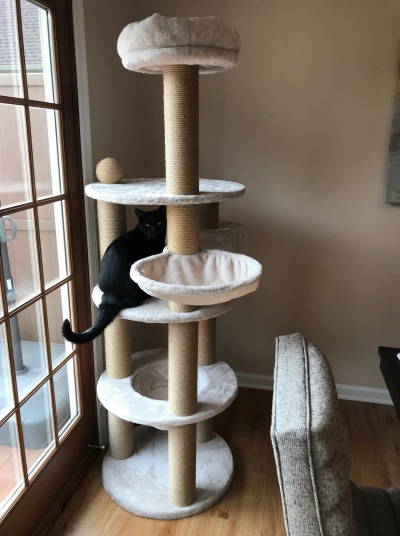 Five-tiered cat tree with large sisal columns in front of French doors. Black cat sitting on center platform of tree