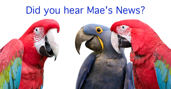 "Three parrots are chatting under the header ""Did you hear Mae's news?"""