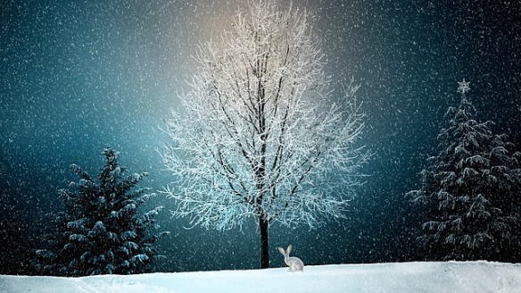 A winter landscape at night with snow covered tree, small rabbit underneath branches by trunk