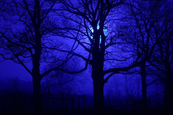 Spooky trees in the dark of night backlit by moon