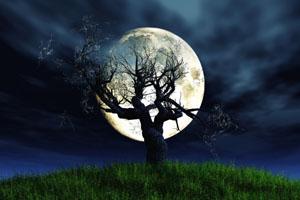 Leafless barren tree in front of oversized full moon iat night