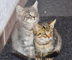 Two stripped kittens huddled together, one sitting up, the other crouched beside it, both looking toward camera, cute and cuddly