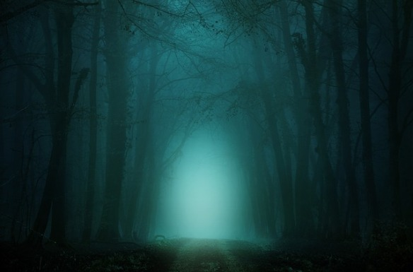 dark, foggy forest with path through center