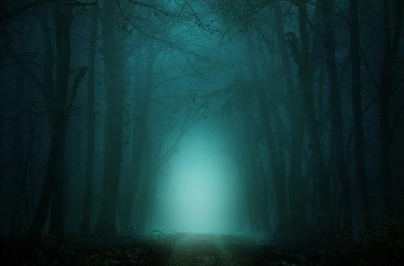 dark, foggy forest with path through center