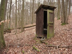 Old outhouse in the woods at autumn, trees bare, leaves covering ground
